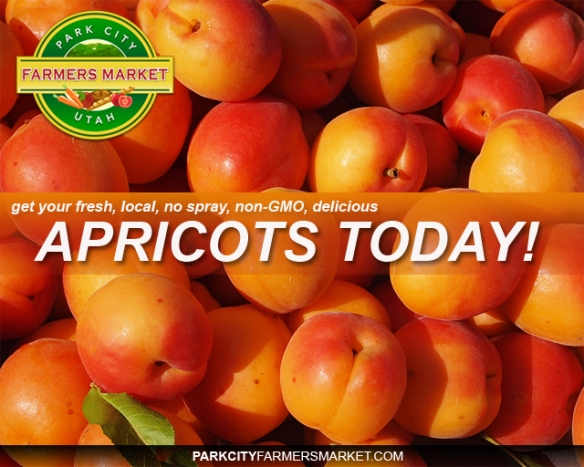 apricots1 copy